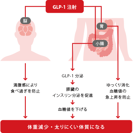 GLP-1ダイエットについて